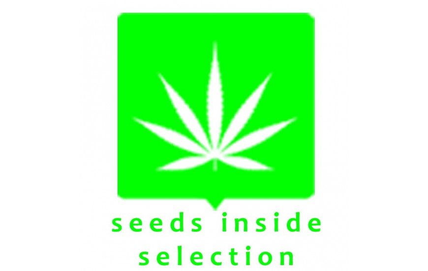 SEEDS INSIDE SELECTION AUTO